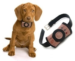 PetsCell Dog Phone