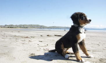Puppy sitting on beach