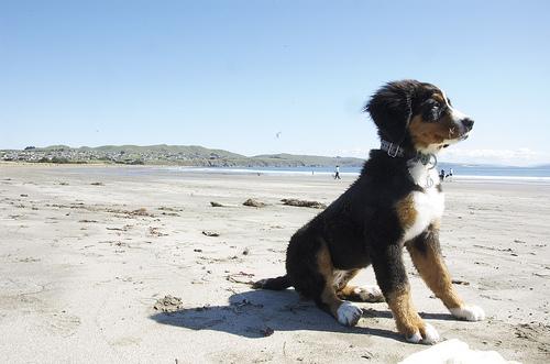 Puppy sitting on beach