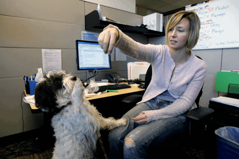 Dog in an office with a woman