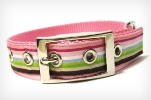 Dog collar with colourful stripes