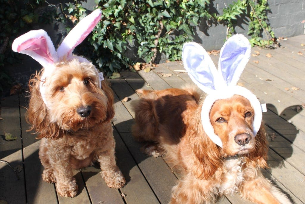 Happy Easter Dog Dog Easter Bunnies06