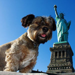 Dog with statue of Liberty