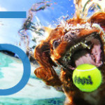 Underwater dog with tennis ball