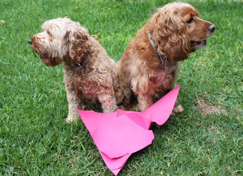 Dogs making heart