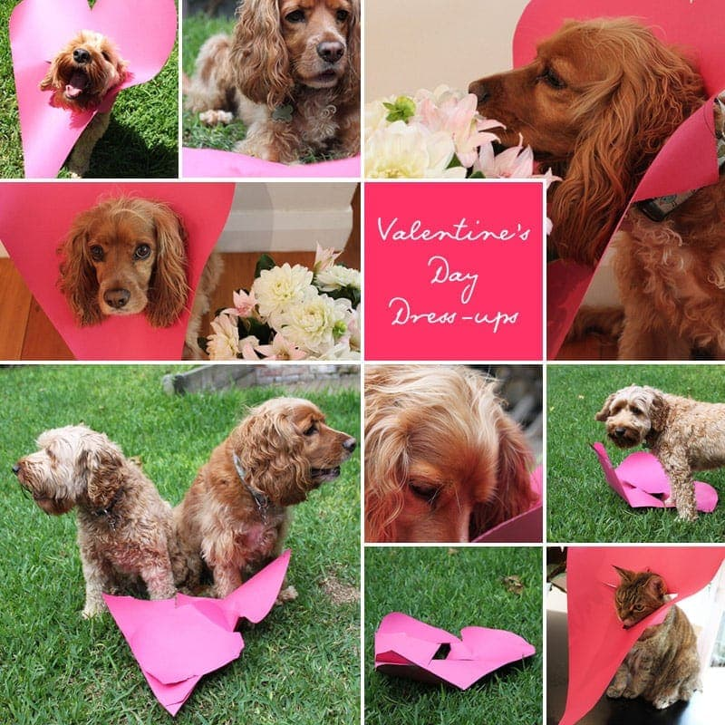 Valentine's Day Dog Dress-ups