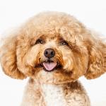 Dog photographed by Barbara O'Brien