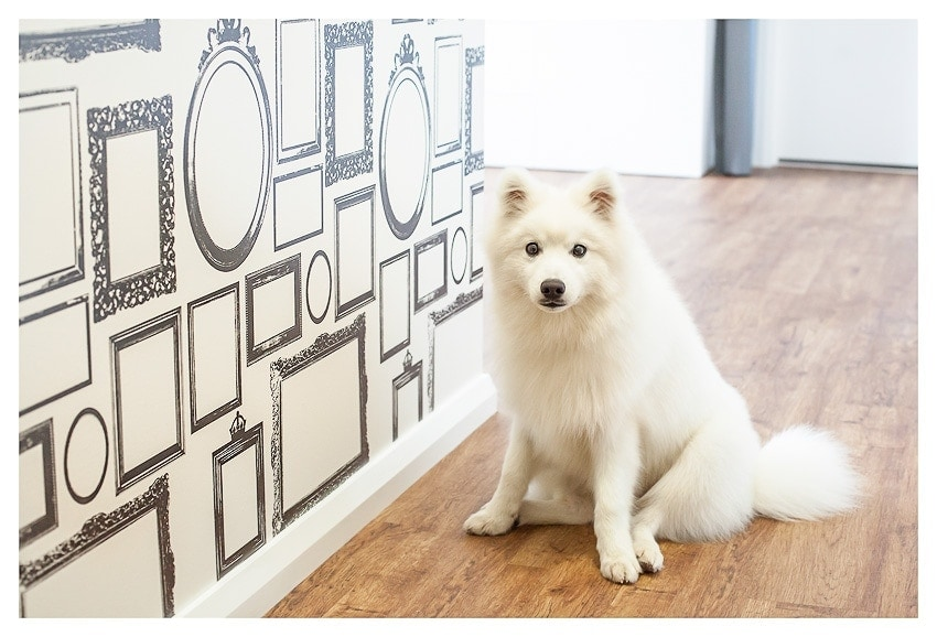 Photo Frame Wall Wallpaper ~ Memories on Display | Puppy Tales