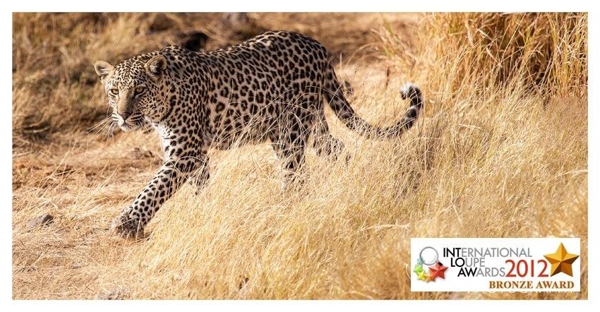 Leopard Namibia Award Winning Wildlife Photographer