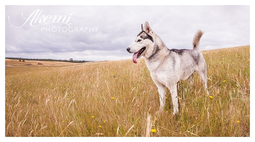 locations-for-you-dog-photography-session