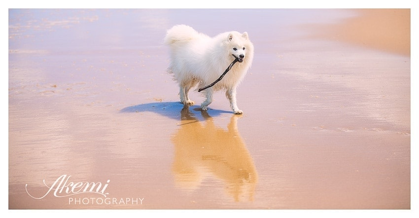 photography-at-the-beach-for-your-pet-dog