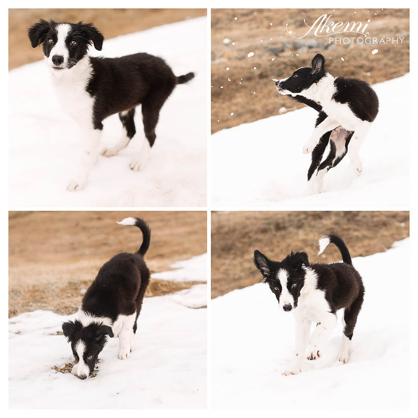 Puppy-playing-in-the-snow