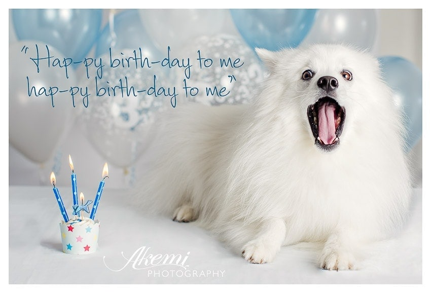 photography-of-dog-at-birthday-party