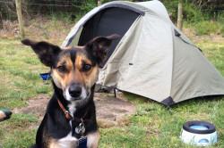 Στο σκύλο αρέσει το camping!!!...