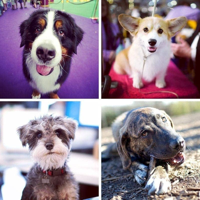 The Dogist from New York