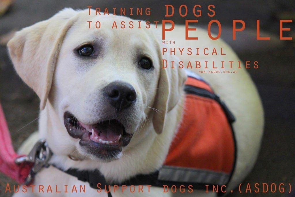 ASDOG Australian Support Dog