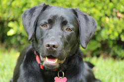 Jenna-assistance-dog_feature