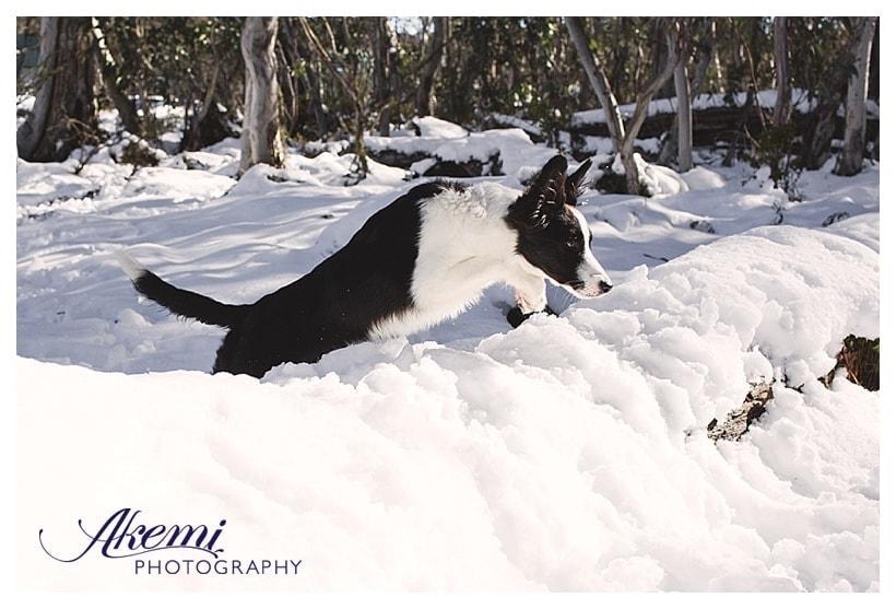akemi-photography-the-jump-shot-5