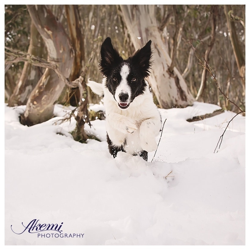 akemi-photography-the-jump-shot-6