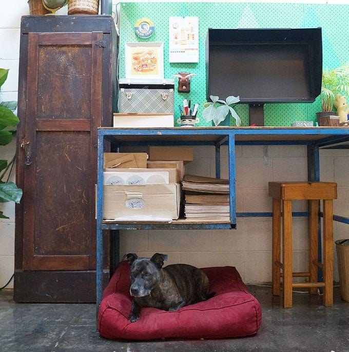Diesel the office dog at Little Gold Studios