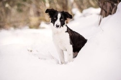akemi-photography-aussie-snow-dogsfeature