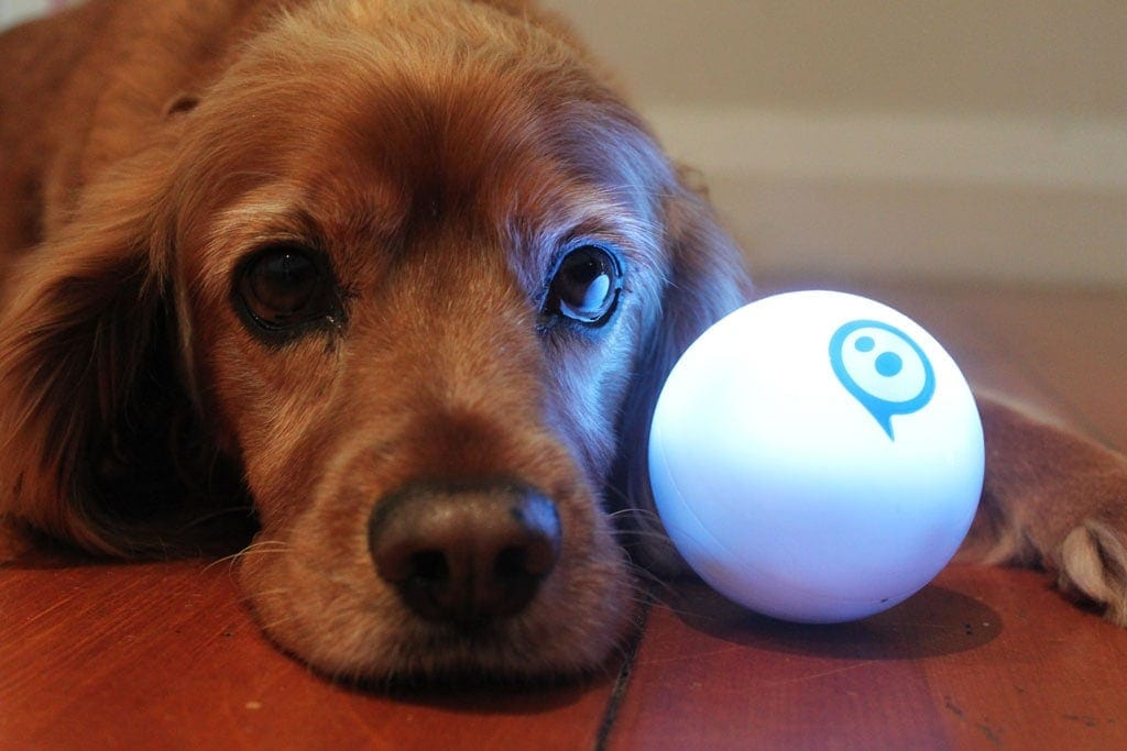 Sphero 2.0 robotic ball and dog
