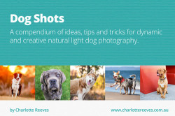 Dog_Shots_feature