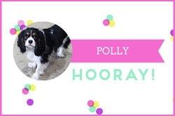 POLLY-(1)