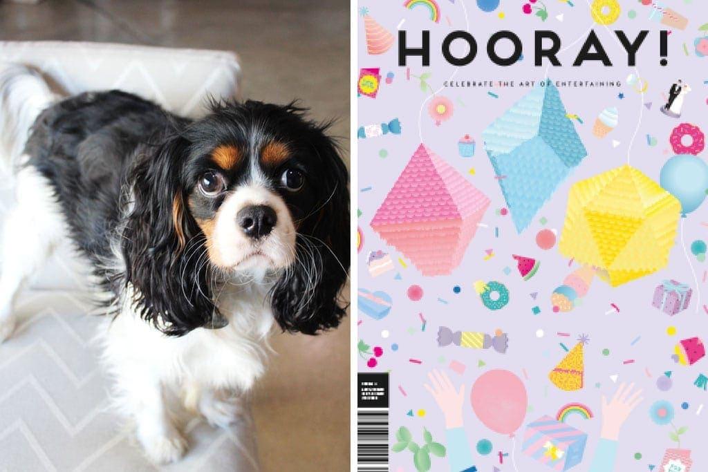 Polly Office Dog HOORAY! Magazine