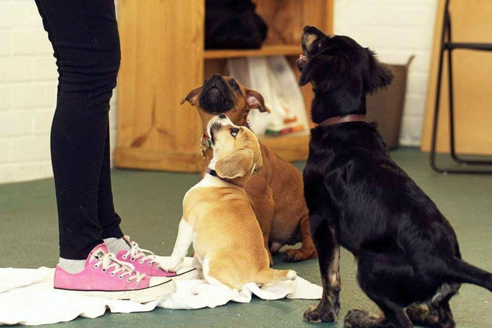 Puppy preschool