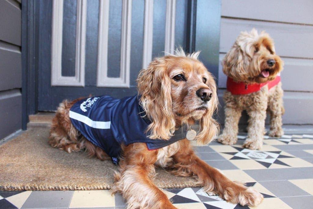 Cress and Eddie Dog Coats