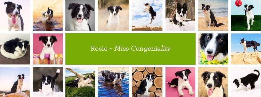 rosie-the-border-collie-is-one-of-the-puppy-tales-pack