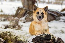 Rescue Dog Adina | Australian Cattle Dog Cross