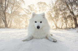 keiko-worlds-cutest-dog