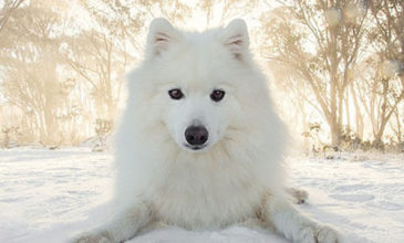 Meet Keiko…. the World's Most Adorable Dog