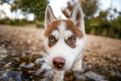 7-top-tips-when-photographing-puppies