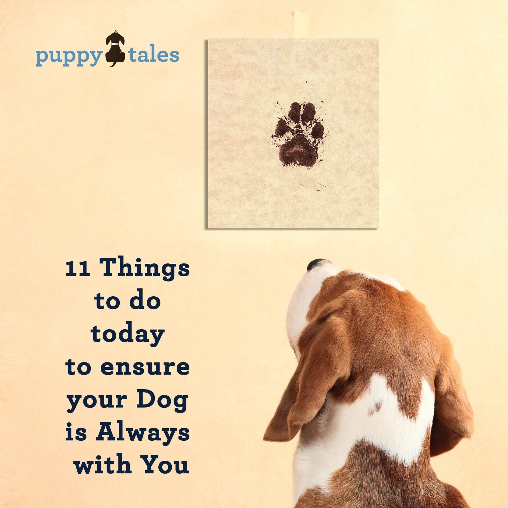 11 Things to do today to ensure your dog is always with you