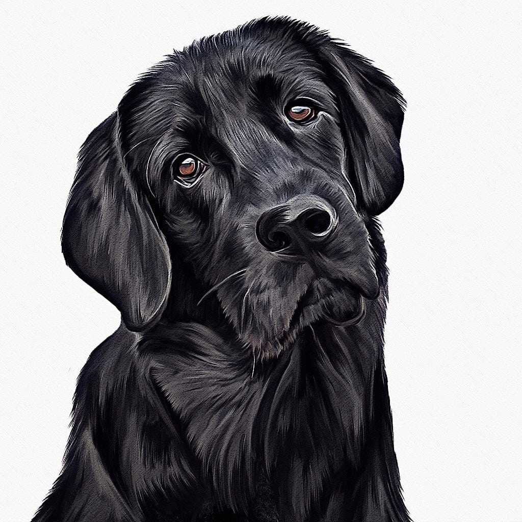 Black-Labrador-drawing-by-commissioned-artist