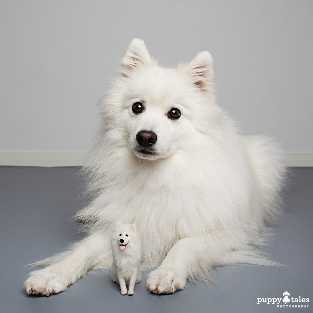 Japanese Spitz Keiko with his 'mini me' a felted version of him.