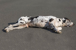 First Aid for Dogs - Serious Injury & Car Accident