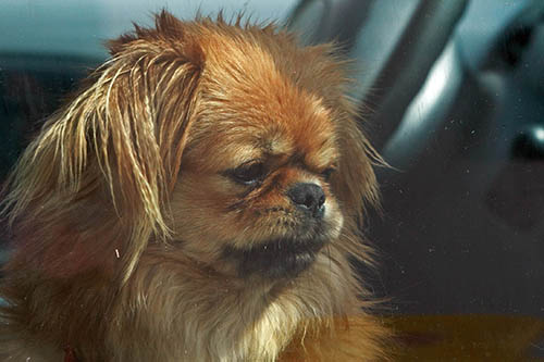 First Aid for Dogs - Heat Stroke | Puppy Tales