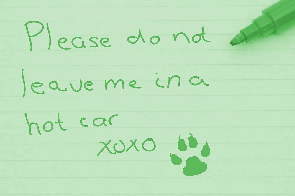 Message from Dogs - Please don't leave me in a hot car