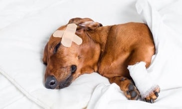 First Aid for Dogs on Puppy Tales