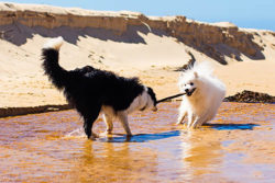 5 Steps to a Better Beach Visit with your Dog- Feature