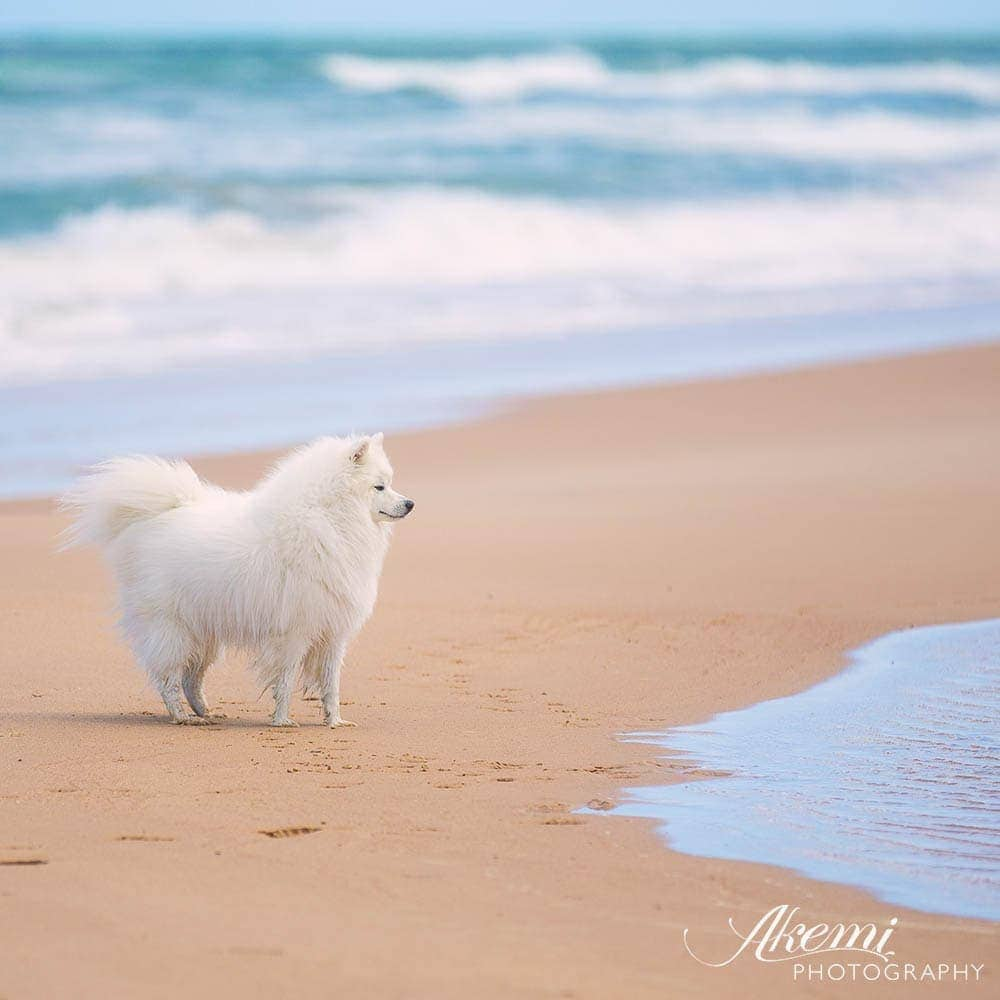 5 steps to the ultimate beach experience for you and your dog.