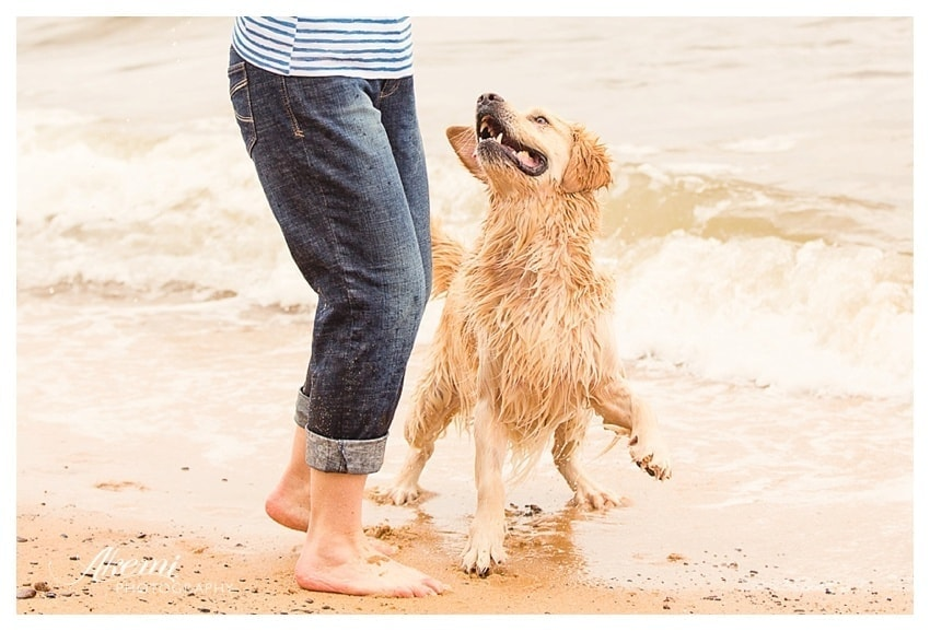 Dog playing on their beach with their owner