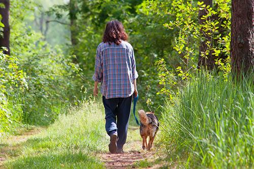 Teaching Your Dog Loose Lead Walking