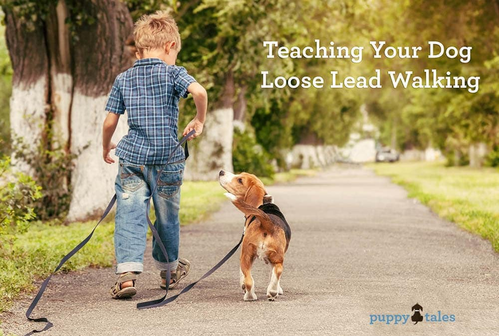 Teach your Dog to Walk on a Loose Lead