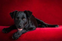 Dog Photo Challenge ~ PUPPY!