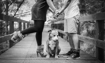 "A dog makes for a great ""canine cupid"". For those dog owners who are currently single, a dog has a knack of making you meet new people. And for those in a relationship, a dog provides a common interest that strengthens and enriches your partnership."